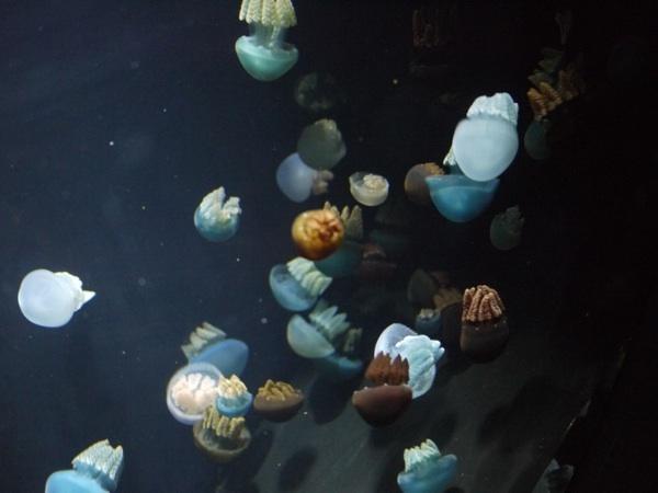 さまざまな色のクラゲ
